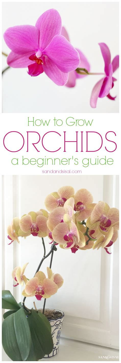 how to grow orchids a beginner s guide sand and sisal