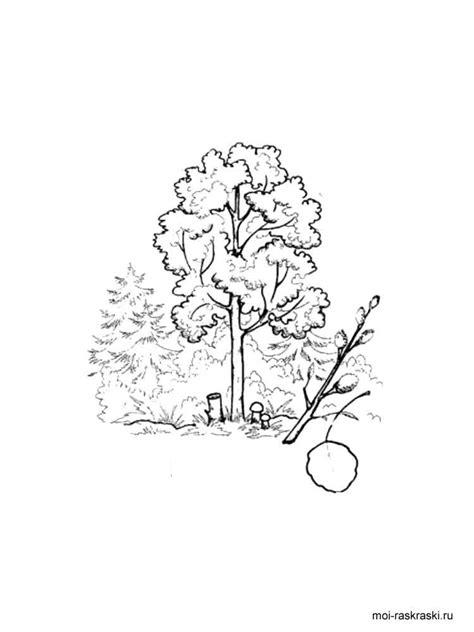 elm tree coloring page arbol dibujos para colorear elm tree coloring pages 3