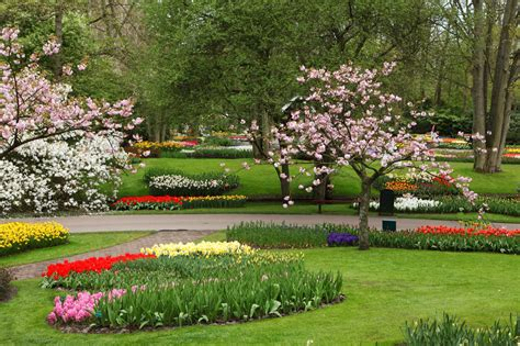 flower garden background wallpapersafari