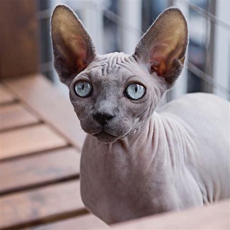 cheap haircuts calgary ne the human s guide to a cat s hair