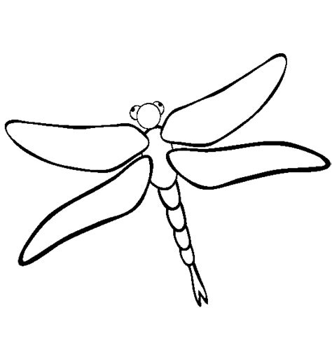 Dragonfly Outline Template by Dragonfly Drawing Quoteko Clipart Best Clipart Best