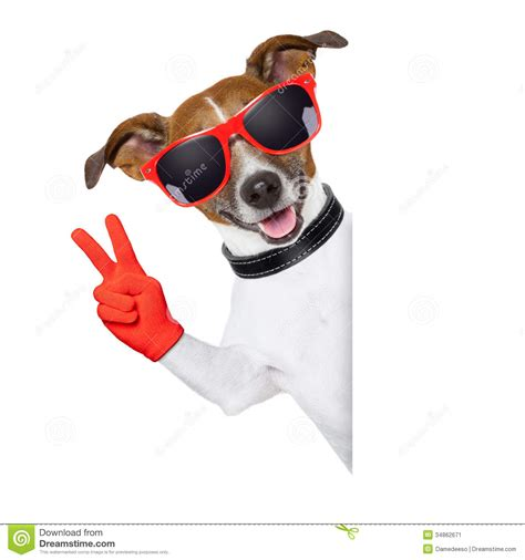 peace puppies peace fingers stock image image 34862671