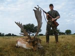 Fallow deer hunts fallow deer hunting world record fallow deer