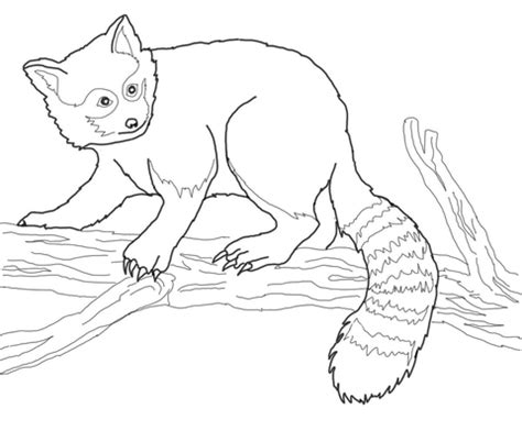 red panda on tree coloring page supercoloring com