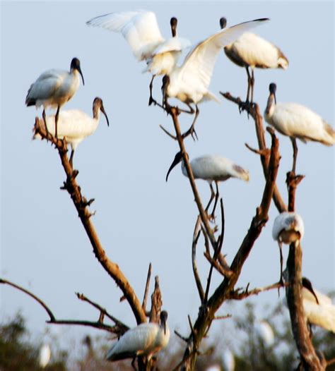 file gudavi bird sanctuary jpg wikimedia commons