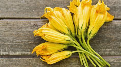 il fiore di zucca fiori di zucca ecco le propriet 224