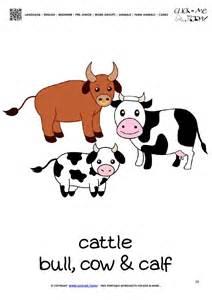 farm animal flashcard cattle printable card of cows