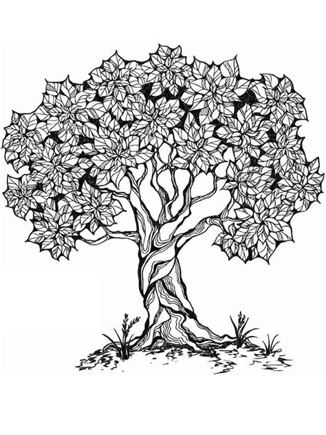 tree coloring pages for adults free printable tree