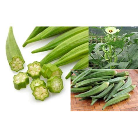 Benih Sayuran Okra jual benih okra hijau varietas 100 gram