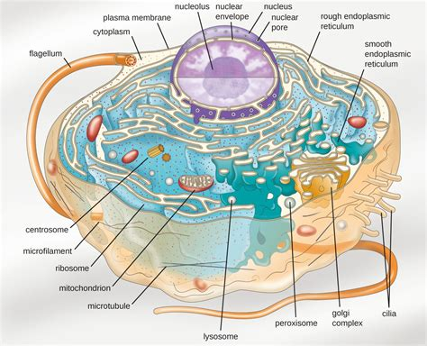 unique characteristics  eukaryotic cells microbiology