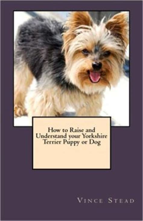 raising yorkie puppies how to raise a yorkie breeds picture