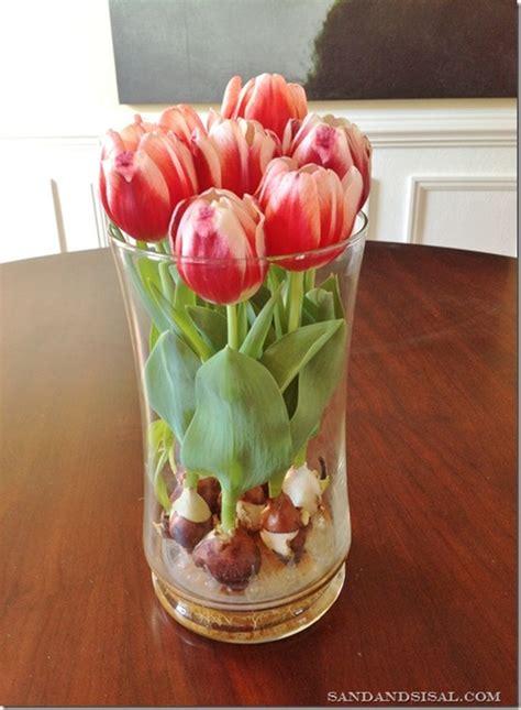 tulipani in vaso come far crescere i tulipani in un vaso con acqua