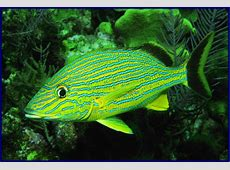 Quia - Fish Identification Giles