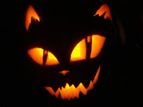 cat pumpkin ideas  pinterest cat pumpkin