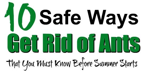 Safe Way To Get Rid Of Ants In Kitchen by 10 Safe Ways To Get Rid Of Ants That You Must Before