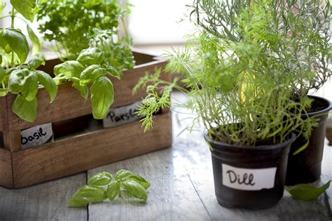 best indoor herb garden dress up your home with these indoor plants that don t