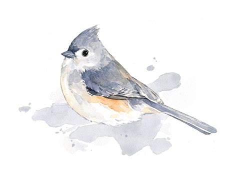 tufted titmouse watercolor print david scheirer