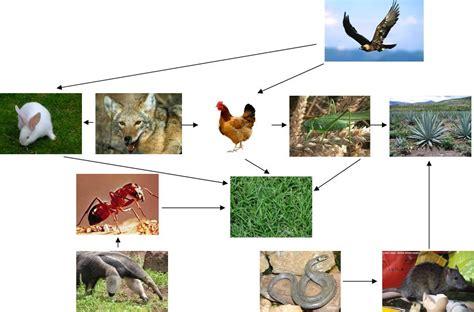 cadena trofica hormigas reserva de la biosfera tehuac 225 n cuicatl 225 n red tr 243 fica