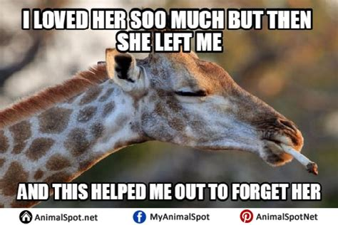 Giraffe Hat Meme - giraffe hat meme 28 images giraffe humor on pinterest