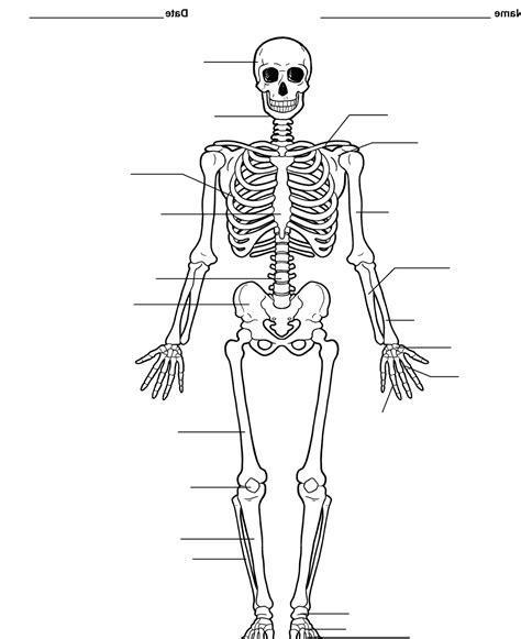diagram of the skeletal system worksheet pictures of the skeletal system labeled on animal picture