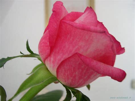 foto fiori foto fiori gratis per sfondi desktop