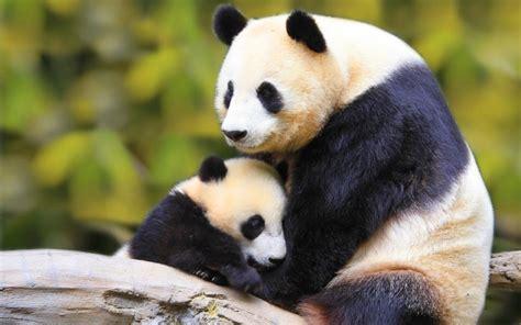 imagenes animales feroces las mejores fotos de animales salvajes im 225 genes