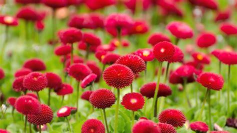 beautiful flowers   hd p p youtube