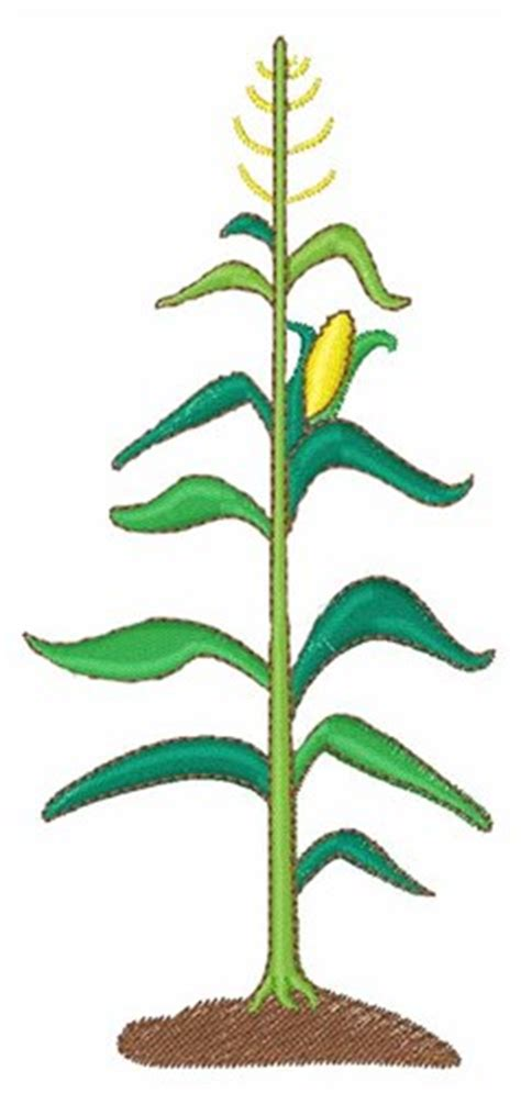 Corn Stalk Template by Corn Stalk Embroidery Designs Machine Embroidery Designs