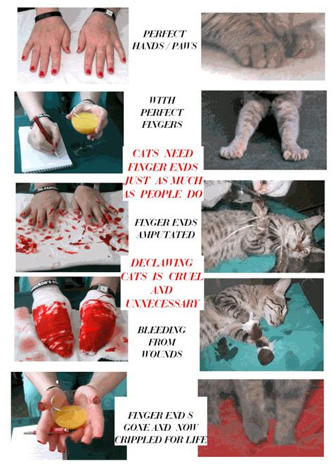 pros and cons of cats printable anti declawing posters