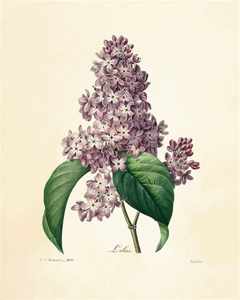 Botanical Garden Prints Hey I Found This Really Awesome Etsy Listing At Https