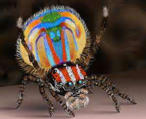 what color is spider blood file peacock spider2 svg wikimedia commons