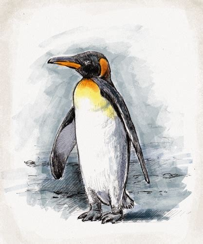 what color are penguins the gallery for gt easy chucky drawings