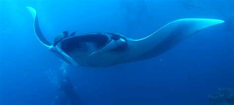 galapagos dive ultimate galapagos diving academy bay diving