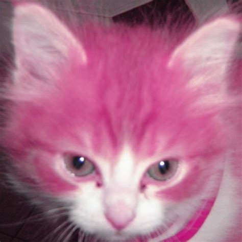 Cat Pink kittens ilikecatsandsatan oms a hairless cat