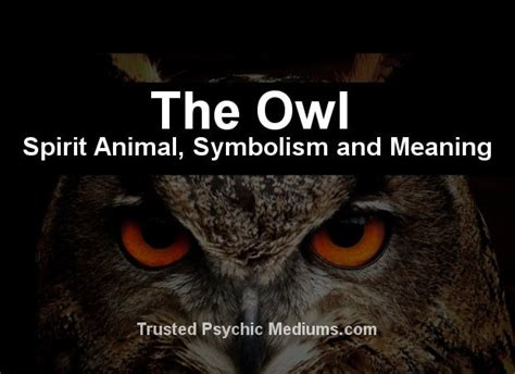 owl symbolism pure spirit the owl spirit animal a complete guide to meaning and