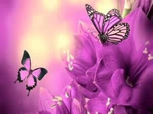 imagenes de rosas iluminadas fondos de mariposas im 225 genes mariposas p 225 gina 2