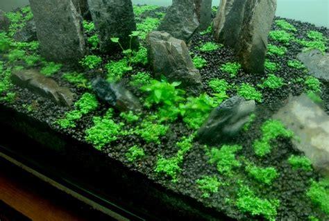 dry start method aquascape indonesia kampoeng aquarium