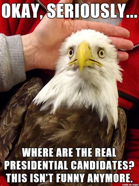 Funny Eagles Meme - funny pictures of the day 33 pics