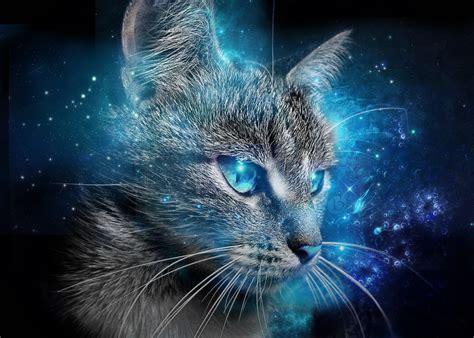 wallpaper blue cat cat blue eyes wallpaper 2015 by badr ds on deviantart
