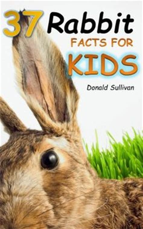 new year rabbit facts if you classroom pets it s best to students and