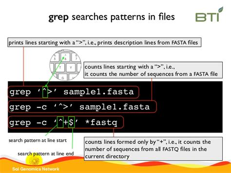 grep pattern end line sgn introduction to unix command line 2015 part 2
