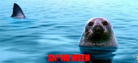 Shark Week Giveaway - shark week sweepstakes business webspring