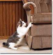 how to stop cat from scratching sofa scratching on furniture a common behavior even in