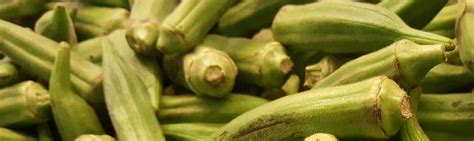can dogs eat okra can dogs eat okra as part of their diet facts
