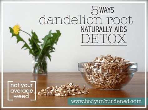 Yellow Root Detox by 5 Ways Dandelion Root Naturally Aids Detox Unburdened