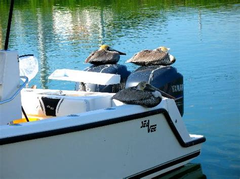 pelican boat key west brown pelicans resting on charter boat at hurricane hole