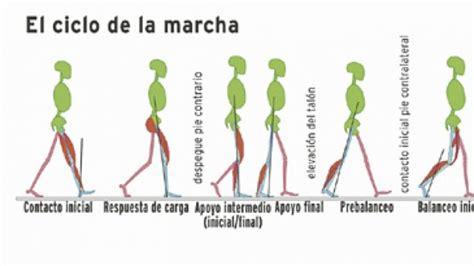 cadena cinematica muscular marcha kinesiologia y ortopedia junio 2011