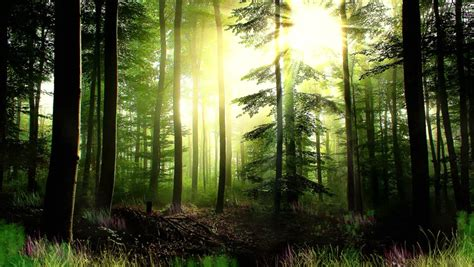 enchanted forest background enchanted forest background stock footage 8161657