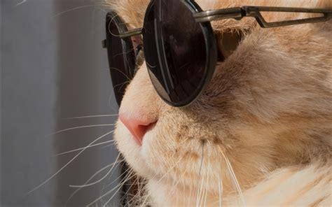 wallpaper chat humour fonds d 233 cran dr 244 le chat lunettes soleil hd image