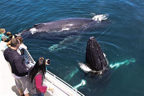 Whale Watching in Santa Barbara   Outdoor Activities